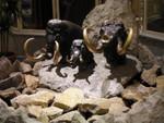 Mammut in Budapest