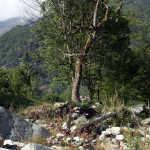 Castagneto 05 (Krägeloh) 166.jpg